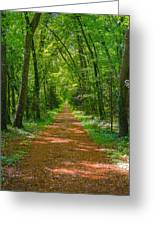 Endless Trail Into The Forest Greeting Card