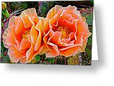 Engelmann Prickly Pear Cactus Flowers In Big Bend National Park-texas Greeting Card
