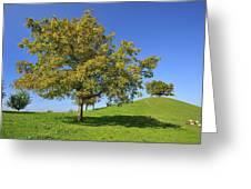 English Black Walnut Tree Switzerland Greeting Card