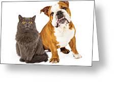 English Bulldog And Gray Cat Greeting Card