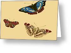 English Butterflies Greeting Card