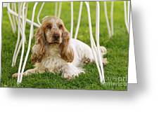 English Cocker Spaniel Greeting Card