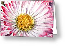 English Daisy Greeting Card