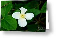 English Dogwood Blossom Greeting Card