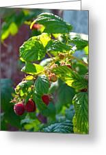 English Raspberries Greeting Card