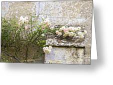 English Roses I Greeting Card