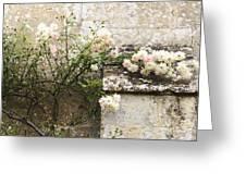 English Roses II Greeting Card