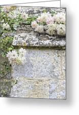 English Roses Vi Greeting Card