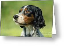 English Setter Dog Greeting Card