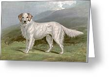 English Setter - Left Greeting Card