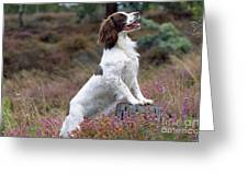 English Springer Spaniel Dog Greeting Card