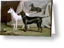 English Terriers Greeting Card