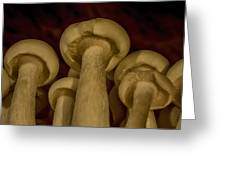 Enokitake Mushrooms  Greeting Card
