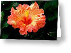 Enticement Greeting Card