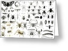 Entomology Myriapoda And Arachnida  Greeting Card