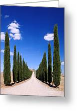 Entrance To Villa Tuscany - Italy Greeting Card