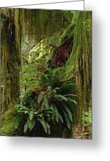 Epiphytic Sword Fern Greeting Card