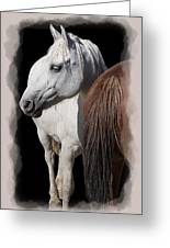 Equine Horse Head And Tail Greeting Card by Daniel Hagerman