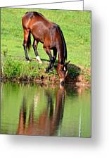 Equine Reflections Greeting Card