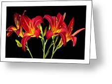 Erotic Red Flower Selection Romantic Lovely Valentine's Day Print Greeting Card