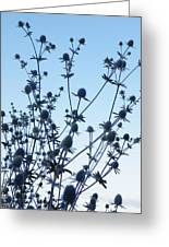 Eryngium Explosion Greeting Card