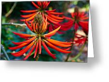 Erythrina Speciosa Greeting Card