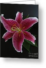 Ester Lily Greeting Card