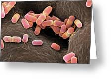 Escherichia Coli Bacteria Greeting Card