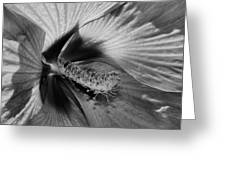 Essence Black And White Greeting Card
