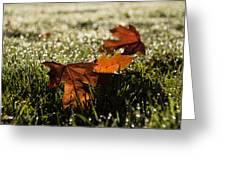 Essence Of Autumn Greeting Card