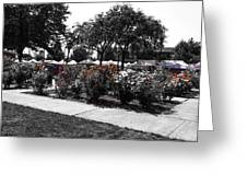 Esther Short Park Rose Garden Greeting Card