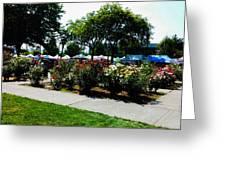 Esther Short Park Rose Gardens Greeting Card