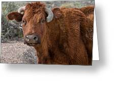 E.t. Highway Bull Greeting Card