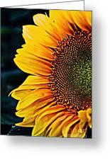 Eternal Sun Greeting Card