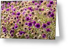 Eternity Flower Greeting Card by Gerald Murray Photography