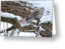 Eurasian  Collard Doves Greeting Card