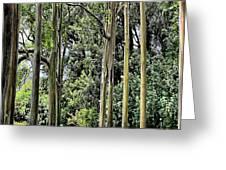 Eucalyptus Greeting Card