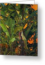 Eugene And Evans' Banana Tree Greeting Card