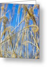 Eulalia Grass Native To East Asia Greeting Card