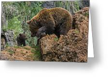 Eurasian Brown Bear 13 Greeting Card
