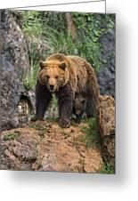 Eurasian Brown Bear 14 Greeting Card