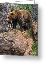 Eurasian Brown Bear 15 Greeting Card