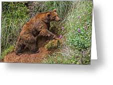 Eurasian Brown Bear 21 Greeting Card