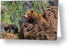 Eurasian Brown Bear 8 Greeting Card