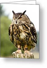 Eurasian Eagle Owl On Log Greeting Card