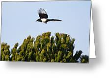 Eurasian Magpie Greeting Card