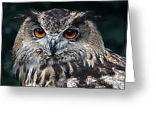 European Eagle Owl  Greeting Card