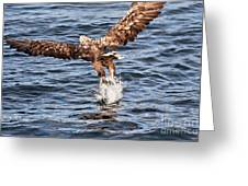 European Fishing Sea Eagle 2 Greeting Card