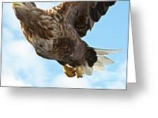 European Flying Sea Eagle 2 Greeting Card