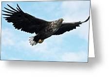 European Flying Sea Eagle 7 Greeting Card